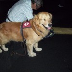 Tejyl the Rescue Canine